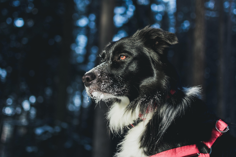 closeup photography of dog