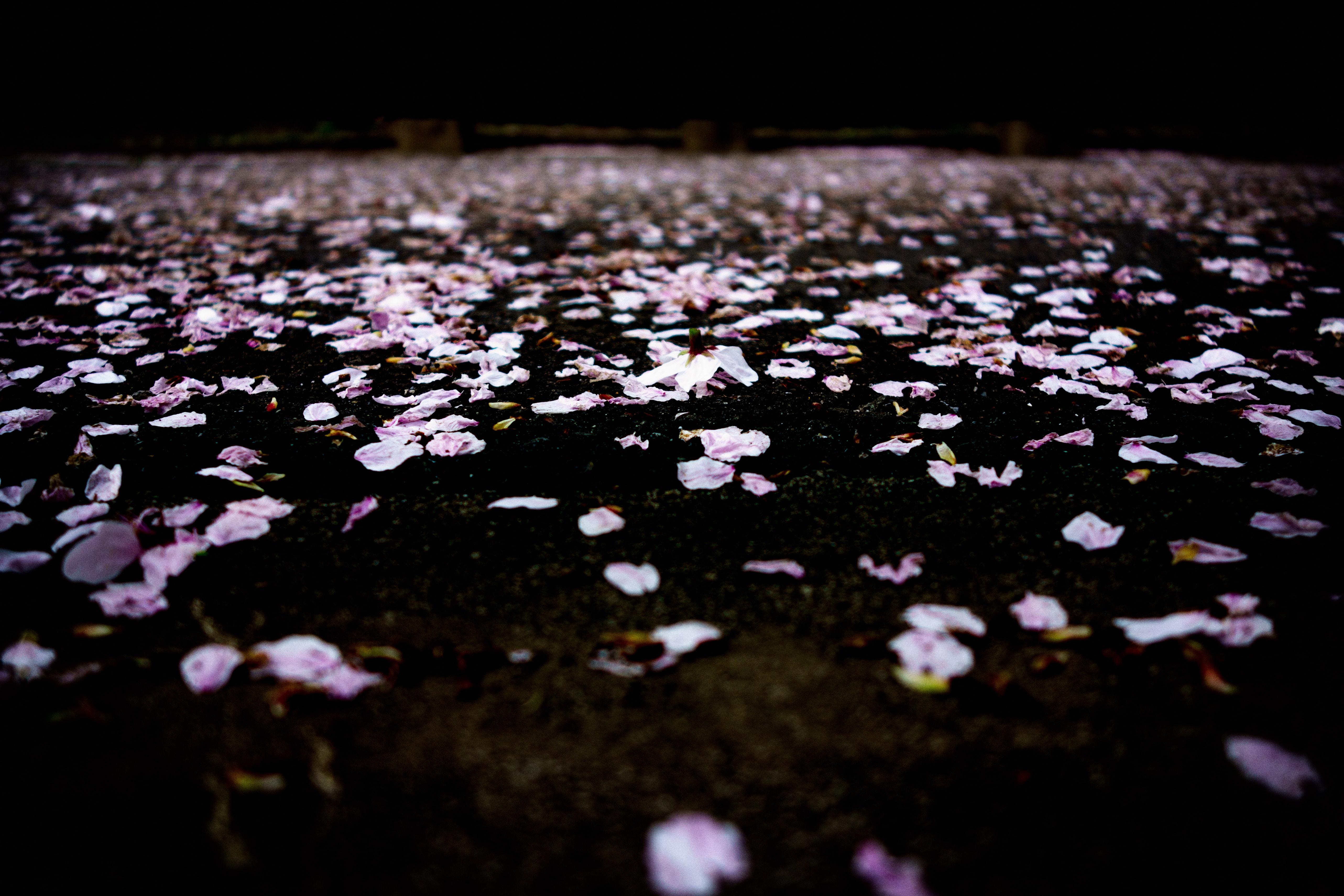 purple petals floating on water