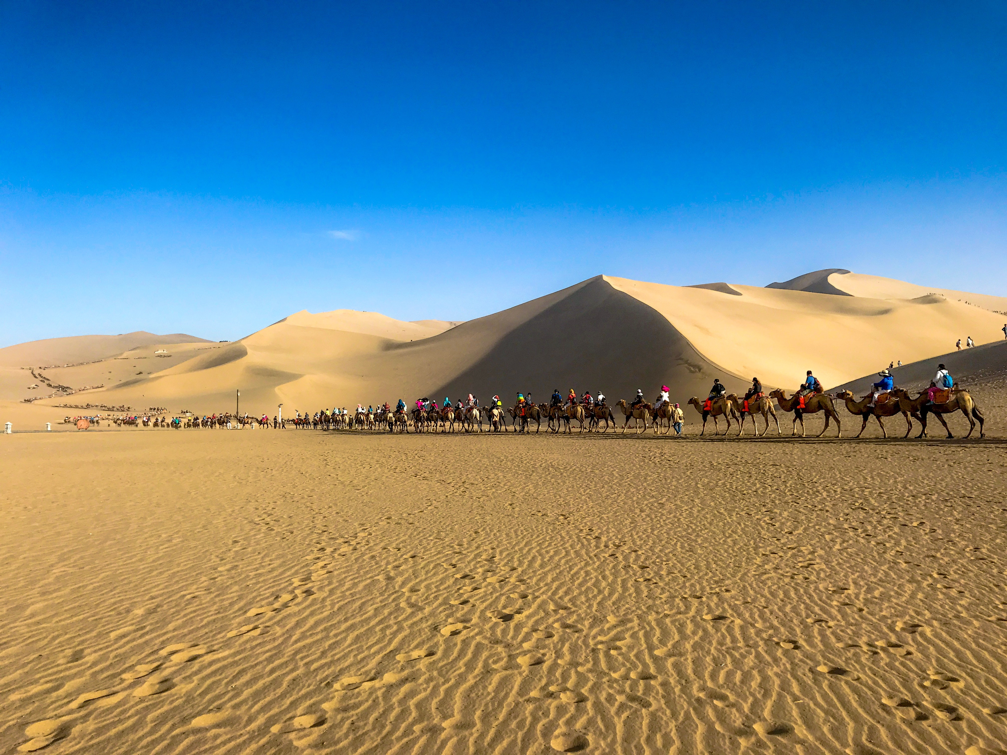 time lapse photography of people riding camels