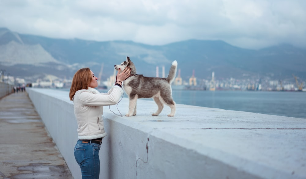woman standing while holding Syberian Husky puppy near sea