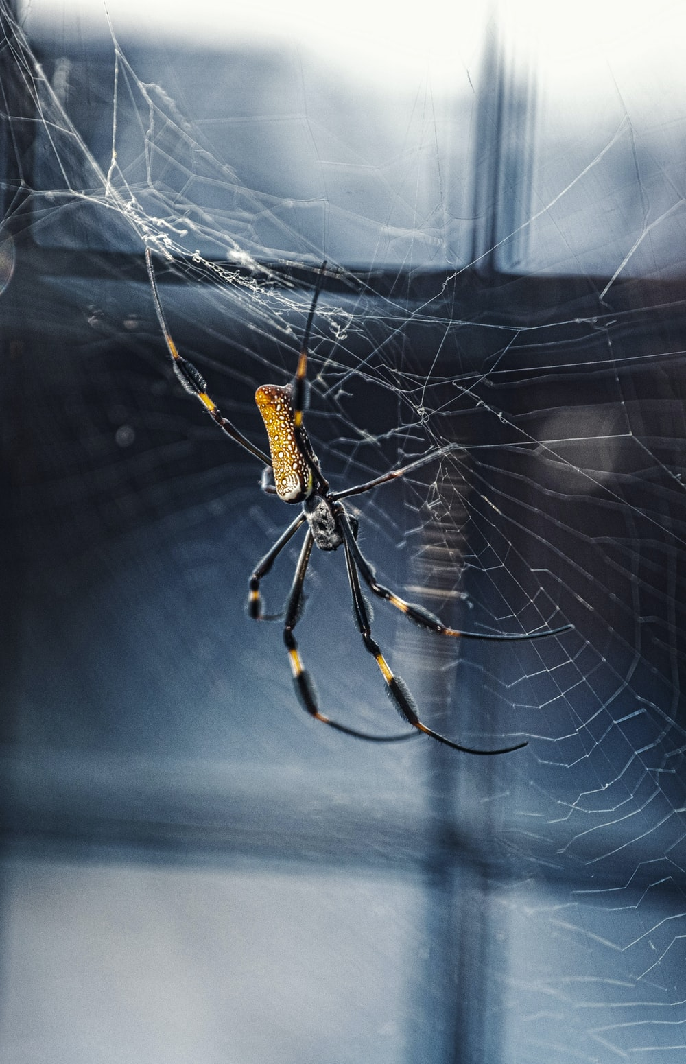 shallow focus photo of black and brown spider