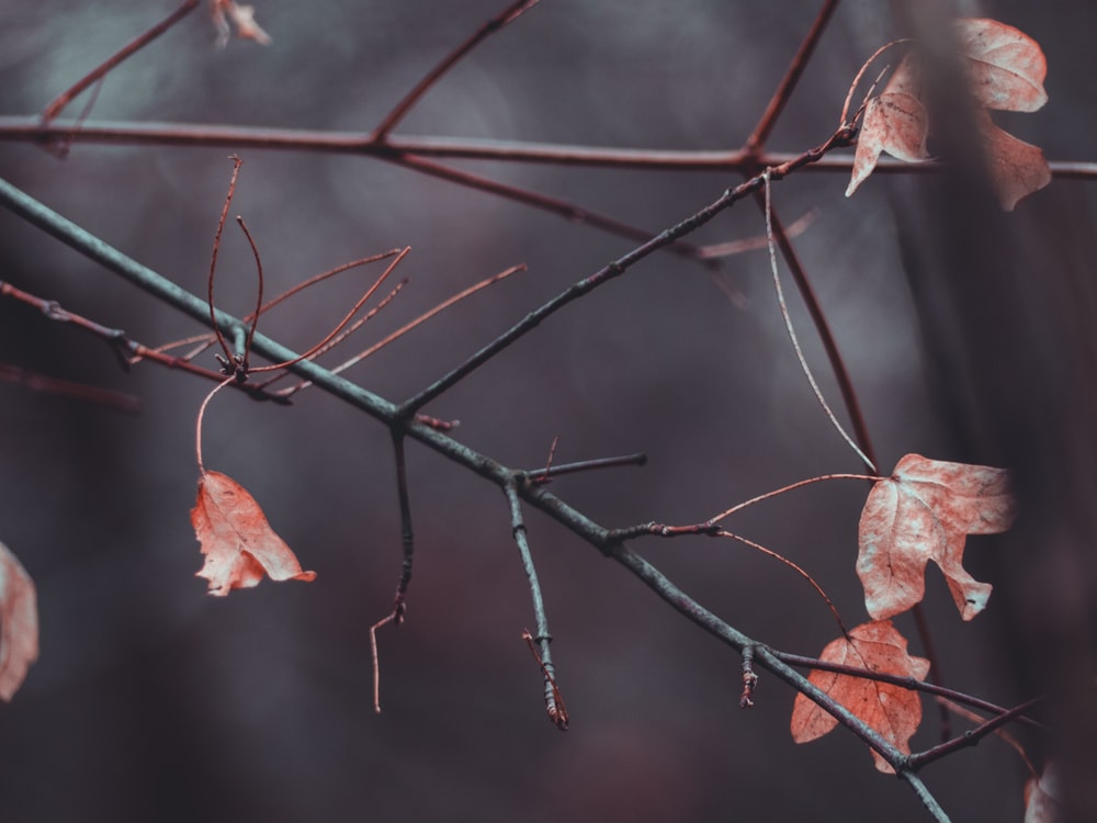 selective focus photography of red leaf tree