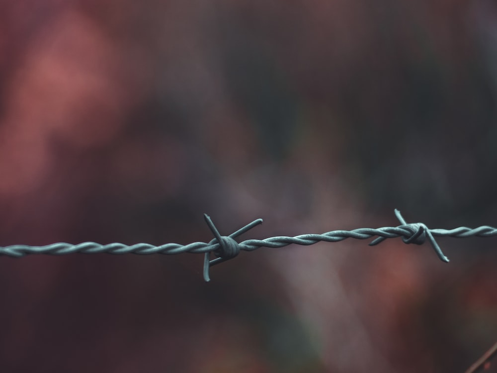 depth of field photography of barbwire