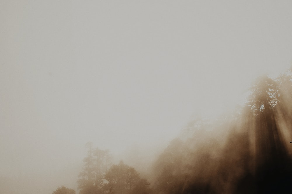 trees covered with fogs