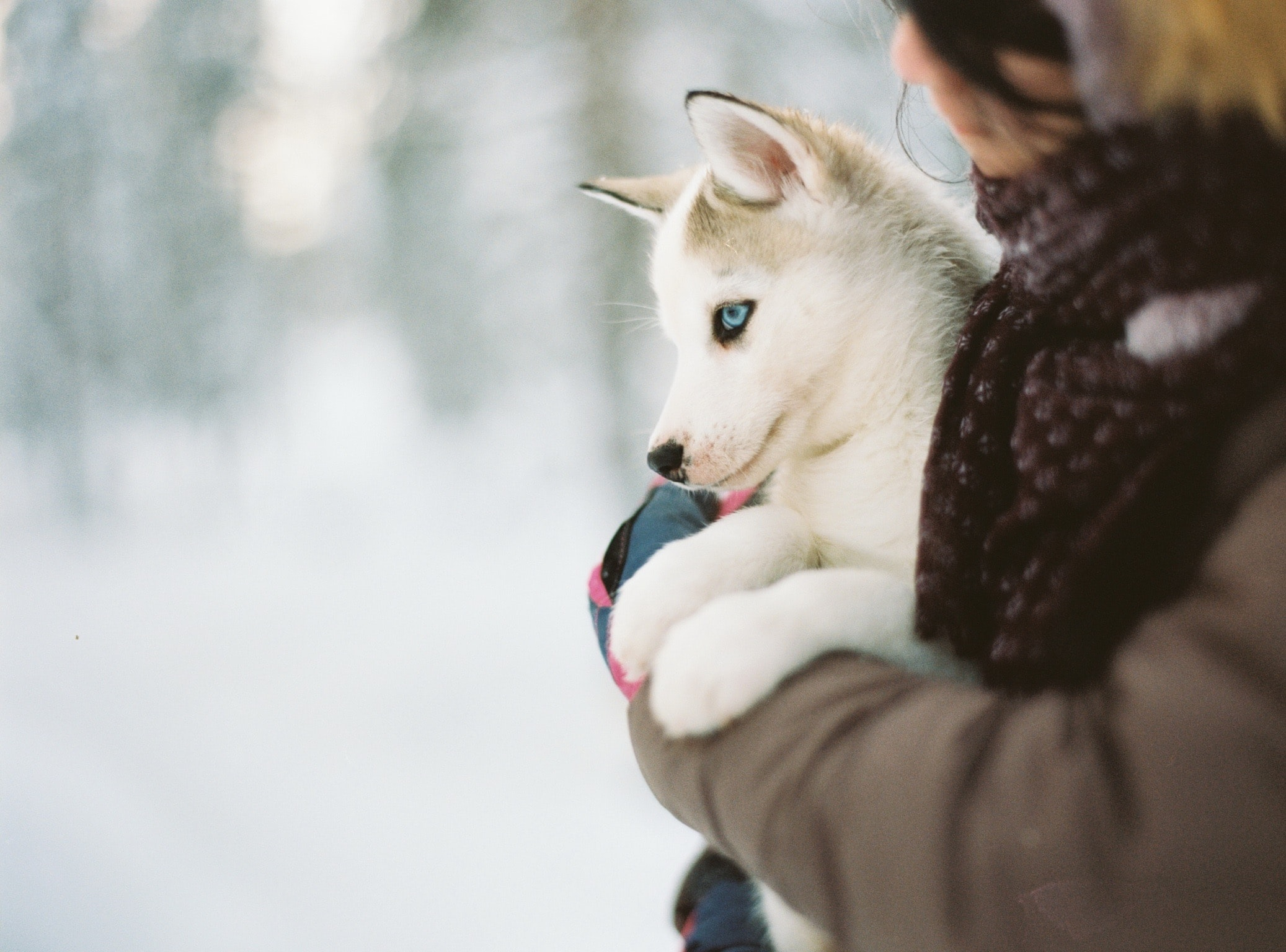 person carrying puppy