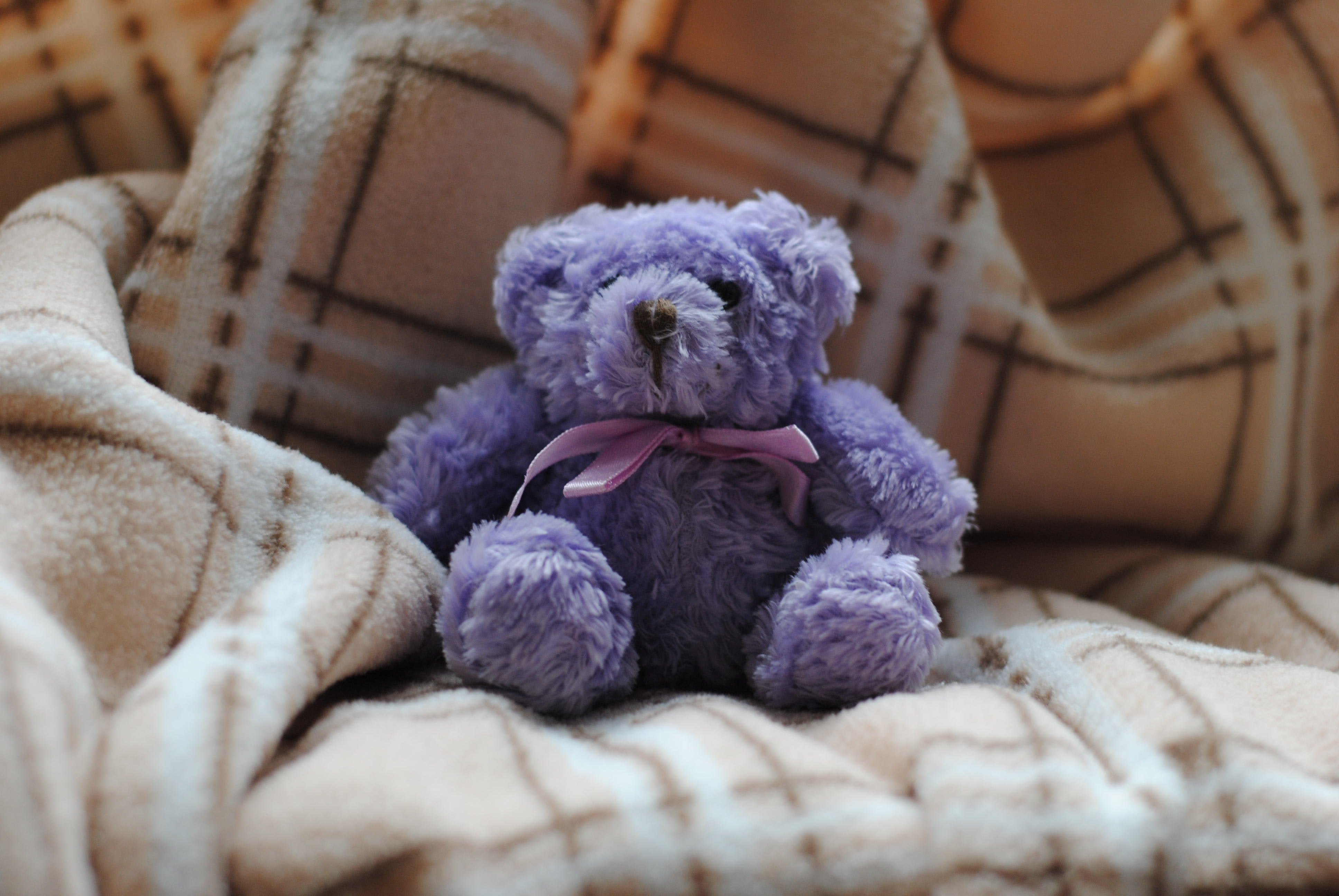 purple bear plush toy on beige and white plaid blanket