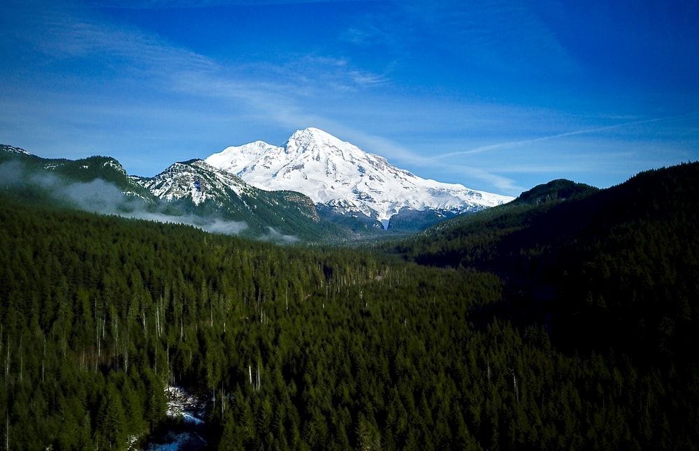 landscape photography of forest against alps mountain