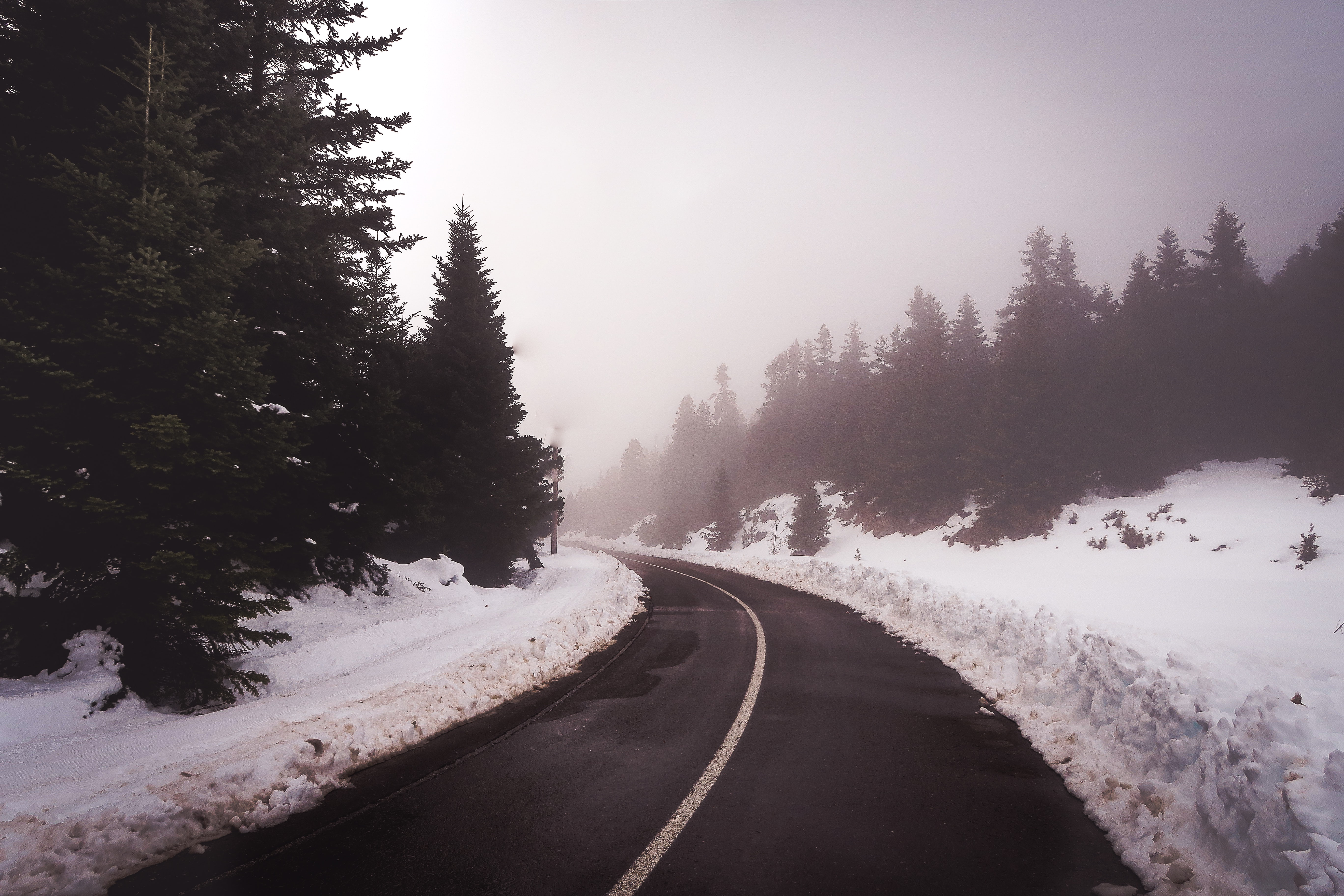 road near snow and trees