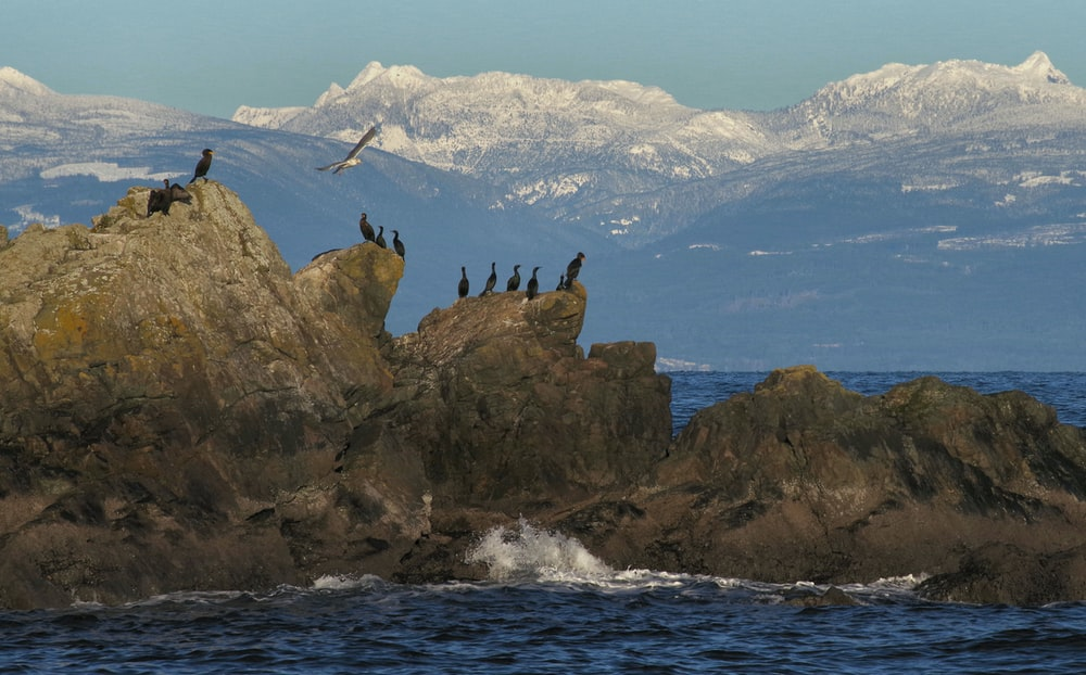 flock of bird on rock formation surrounded by water