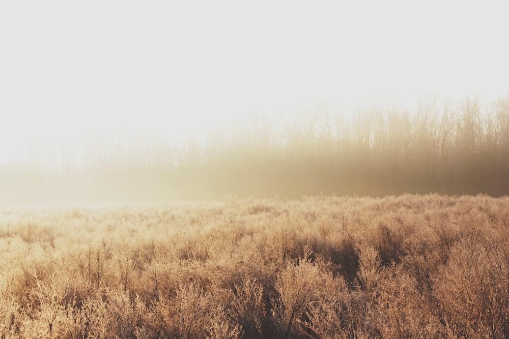 foggy brown field