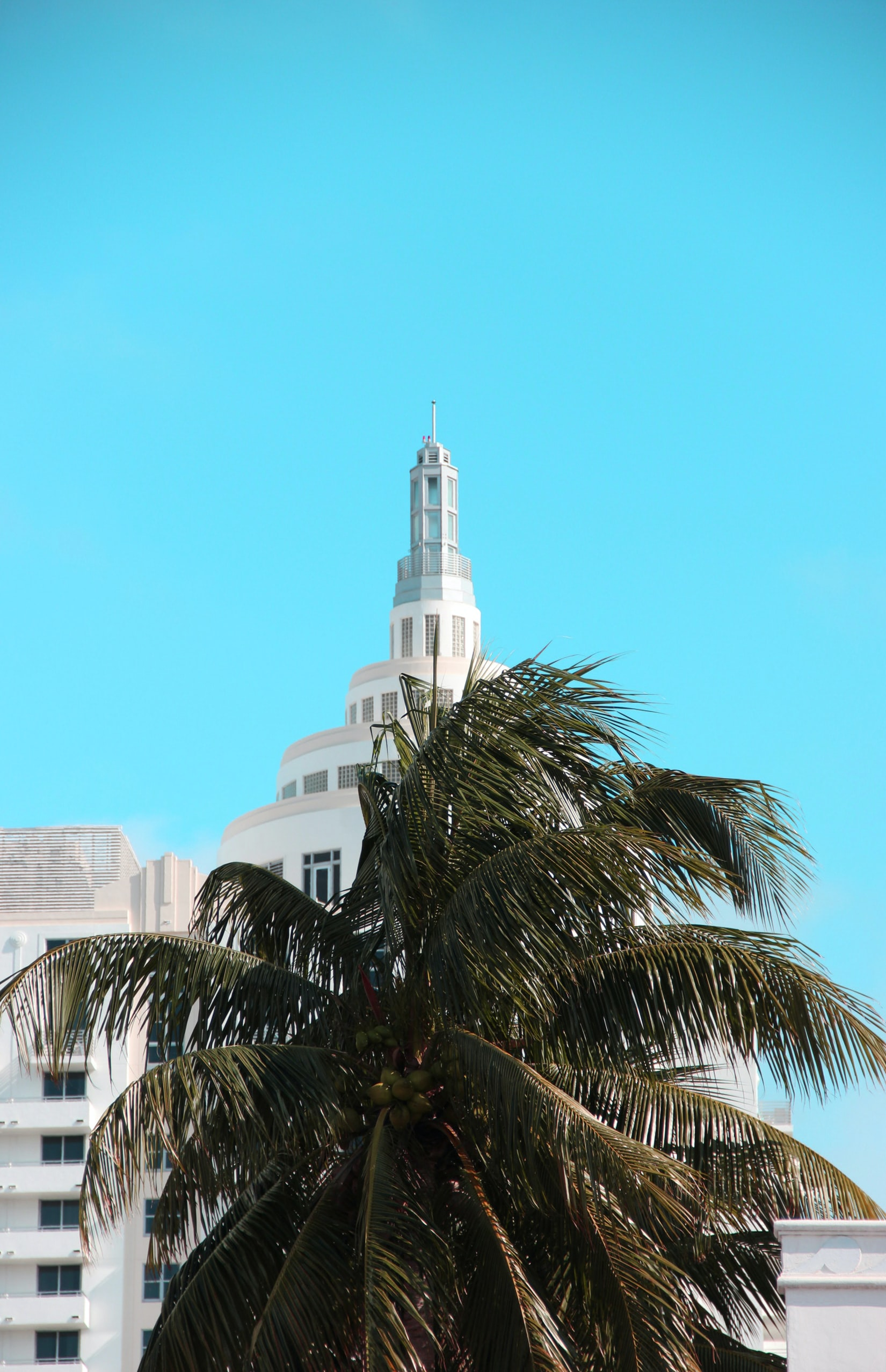 coconut tree near white building