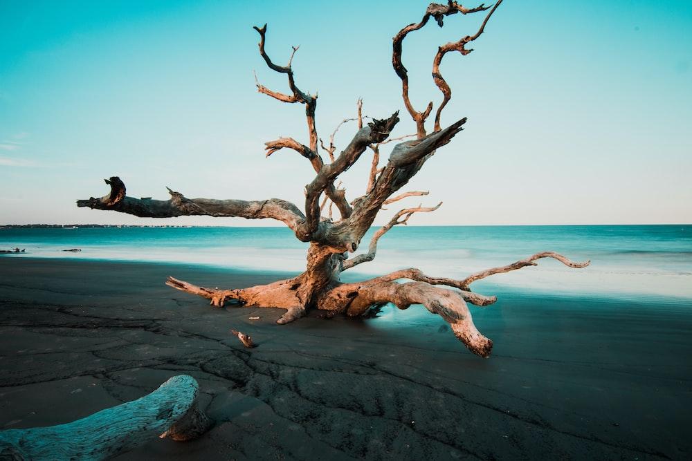 driftwood on grey beach sands