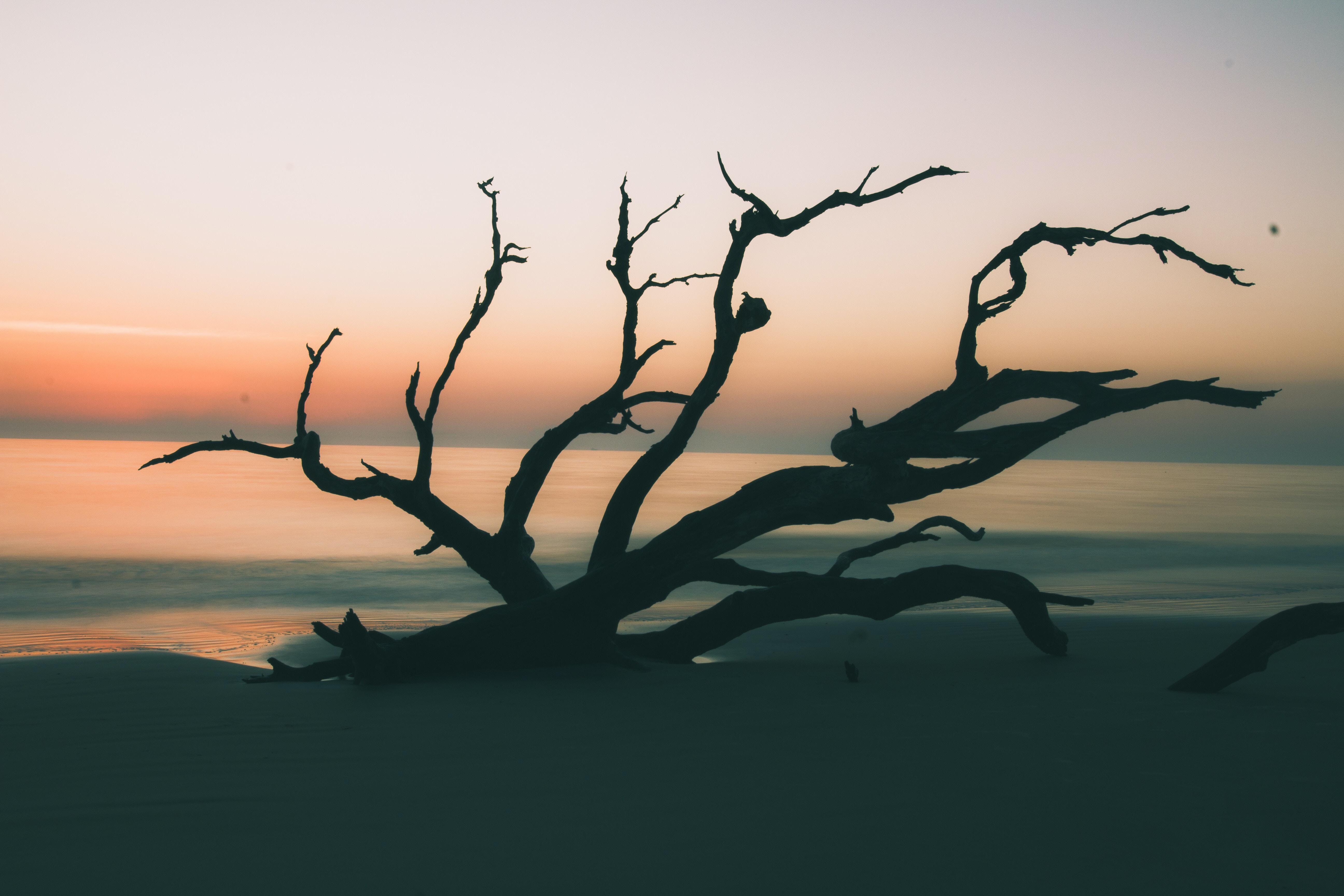 silhouette of drift wood