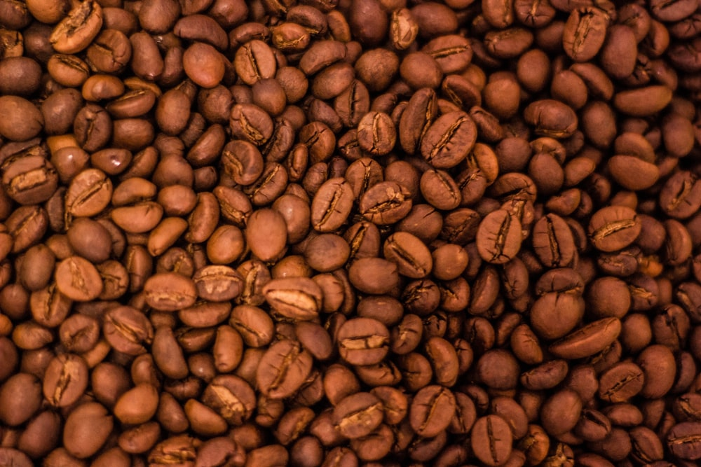 brown coffee bean lot