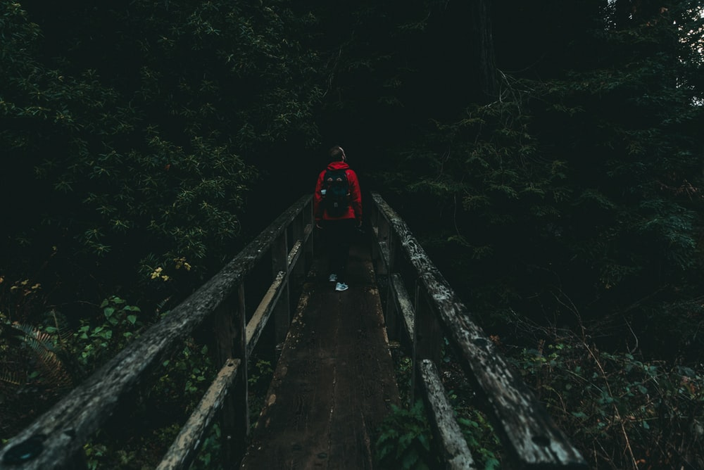 person walking on bridge between trees
