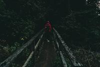 person walking on bridge between trees