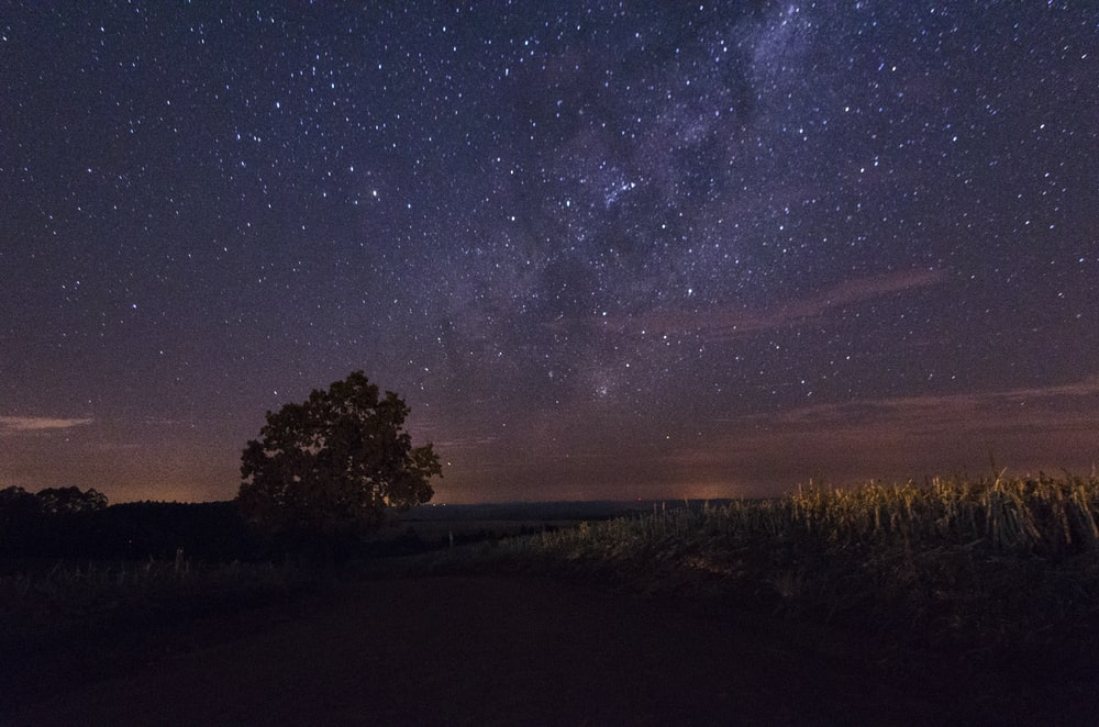silhouette photography of tree during milky way