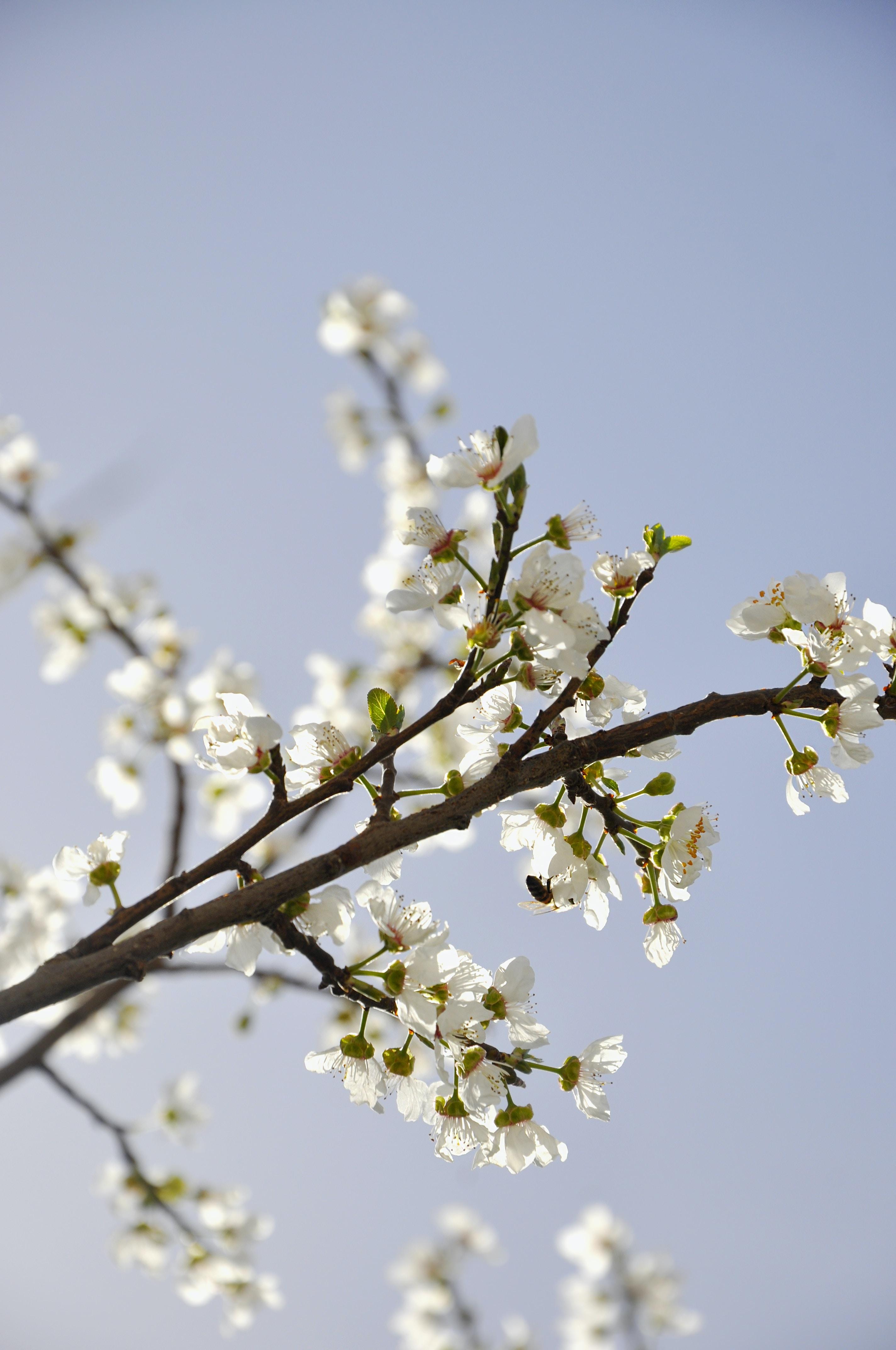 tilt shift lens photography of white flowers