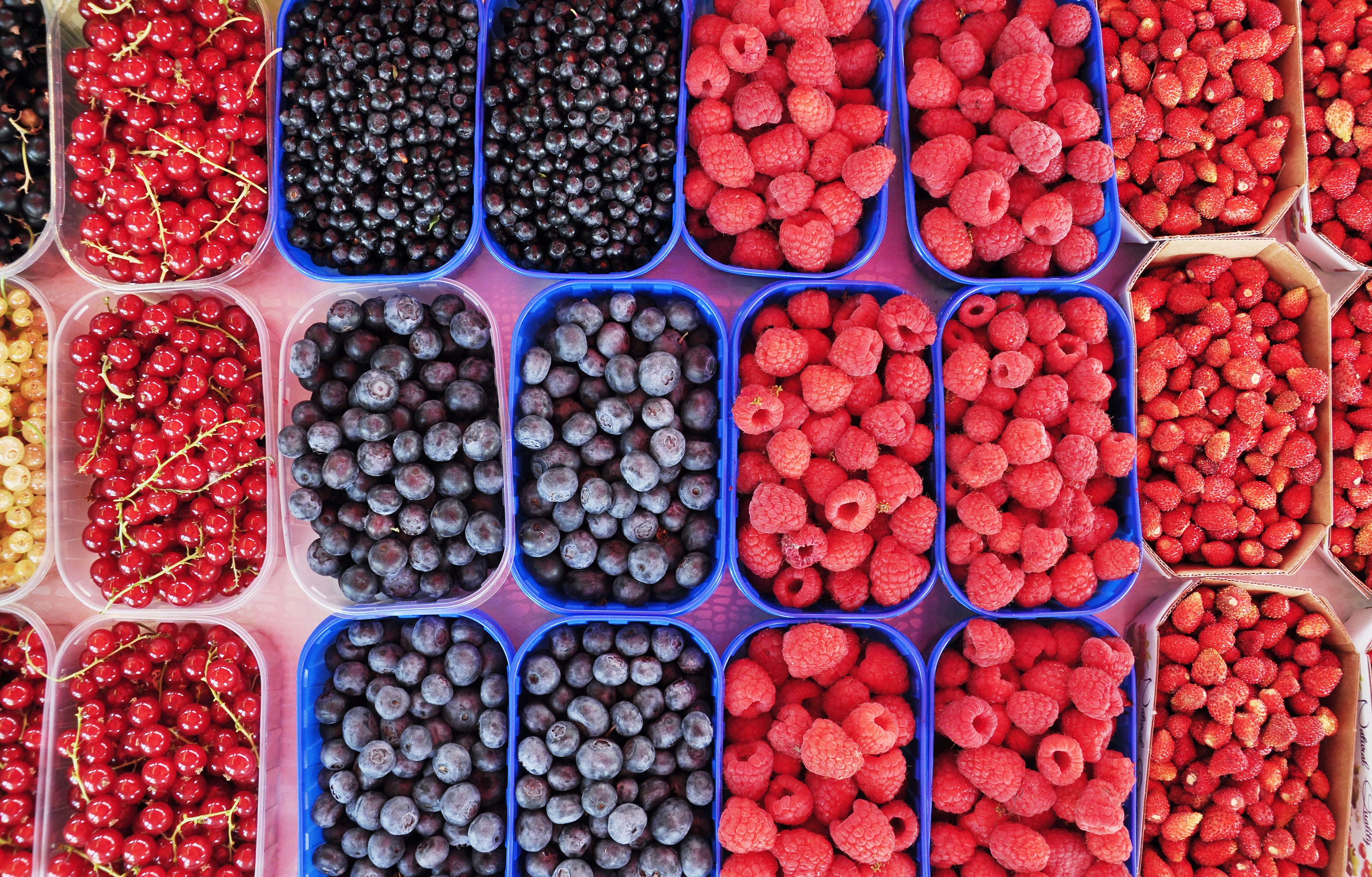 flat lay photography of boxes of berries