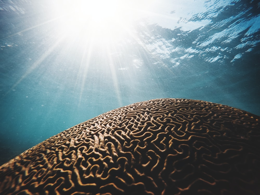 brown coral under the body of water with sun streaks in closeup photography