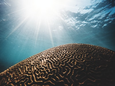 brown coral under the body of water with sun streaks in closeup photography saint lucia teams background
