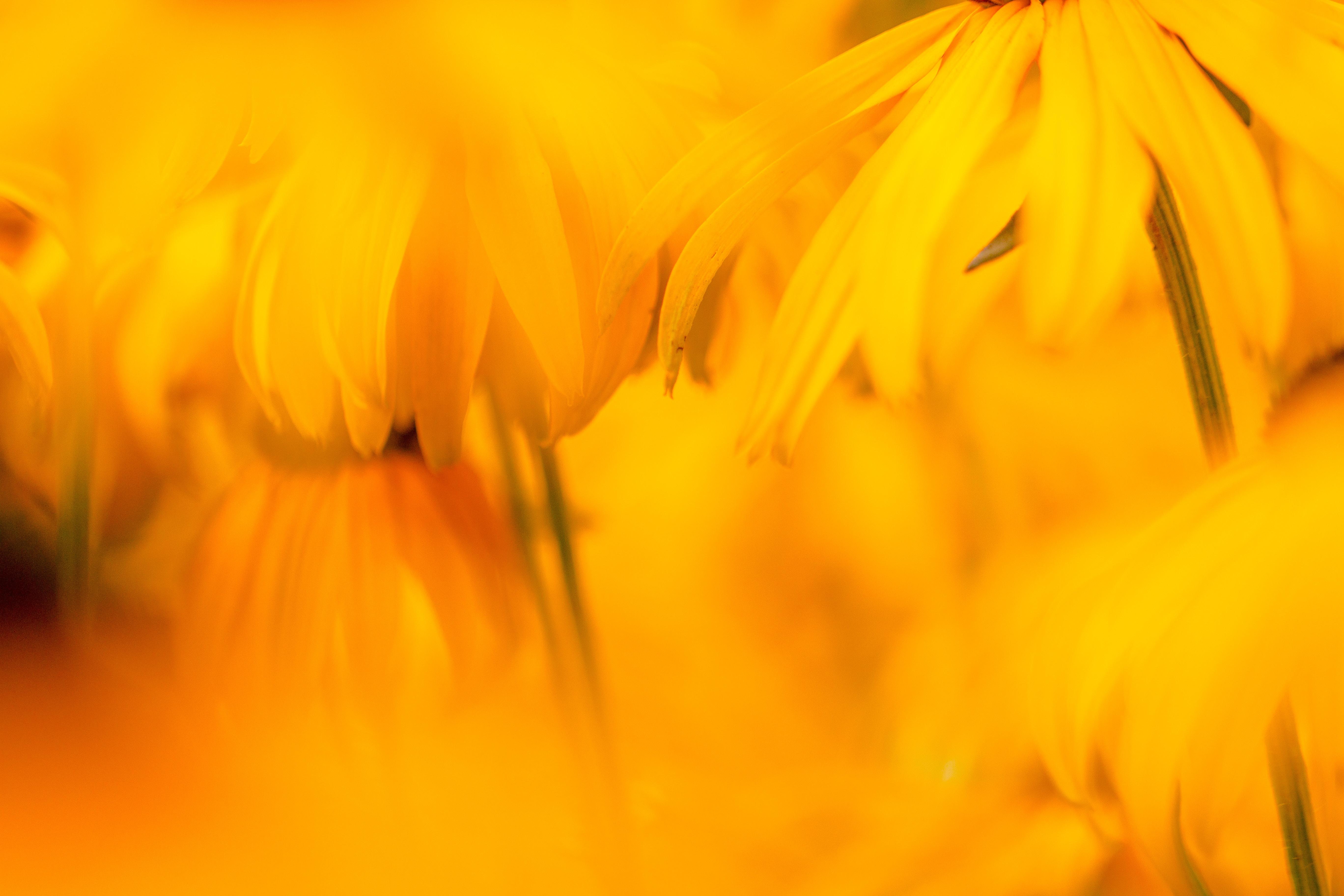 macro shot of yellow flowers