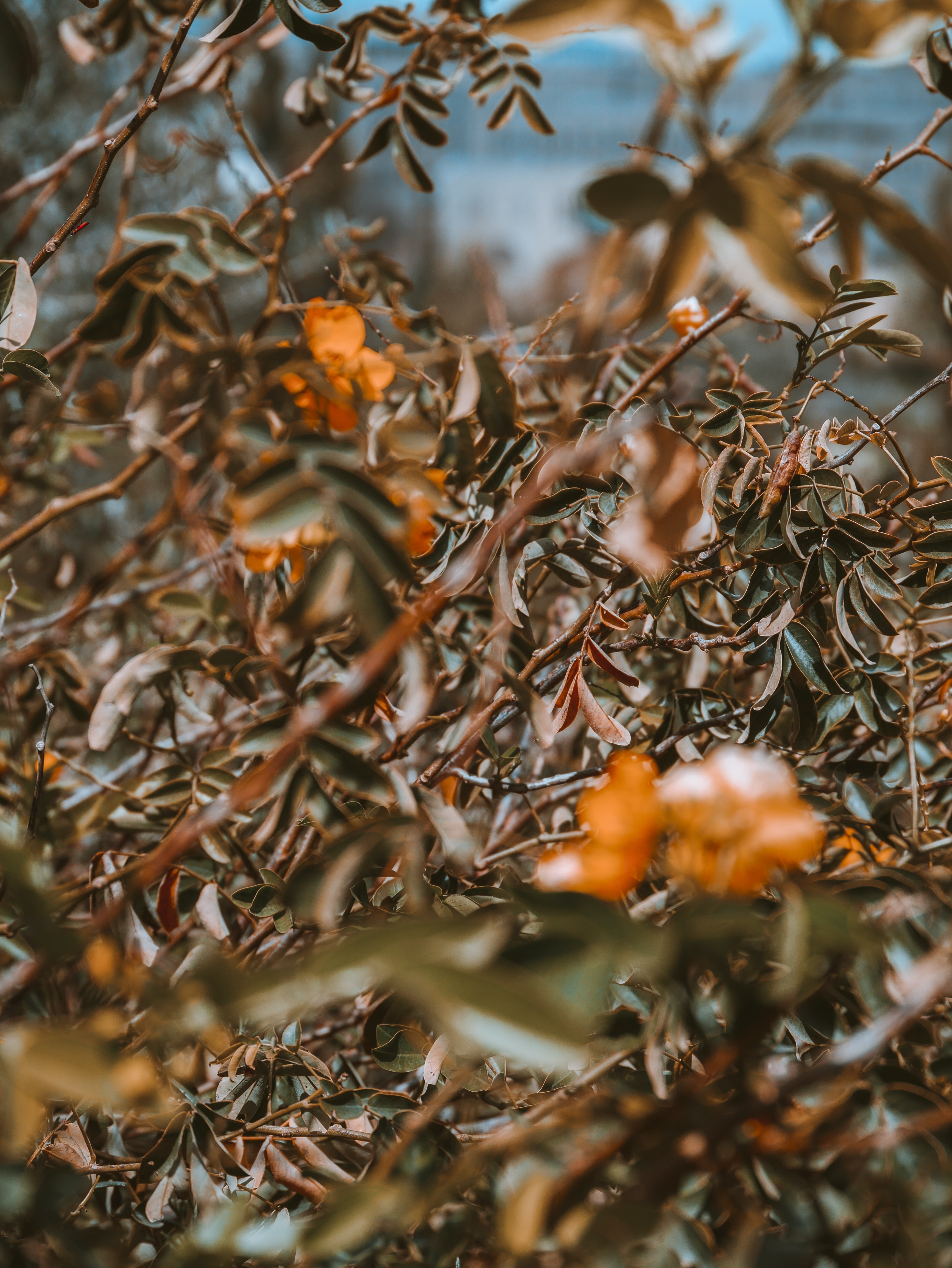 macro photography of brown leafed plant