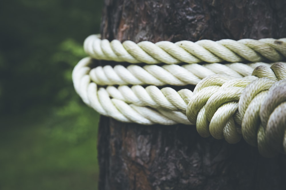 white rope on brown tree closeup photography