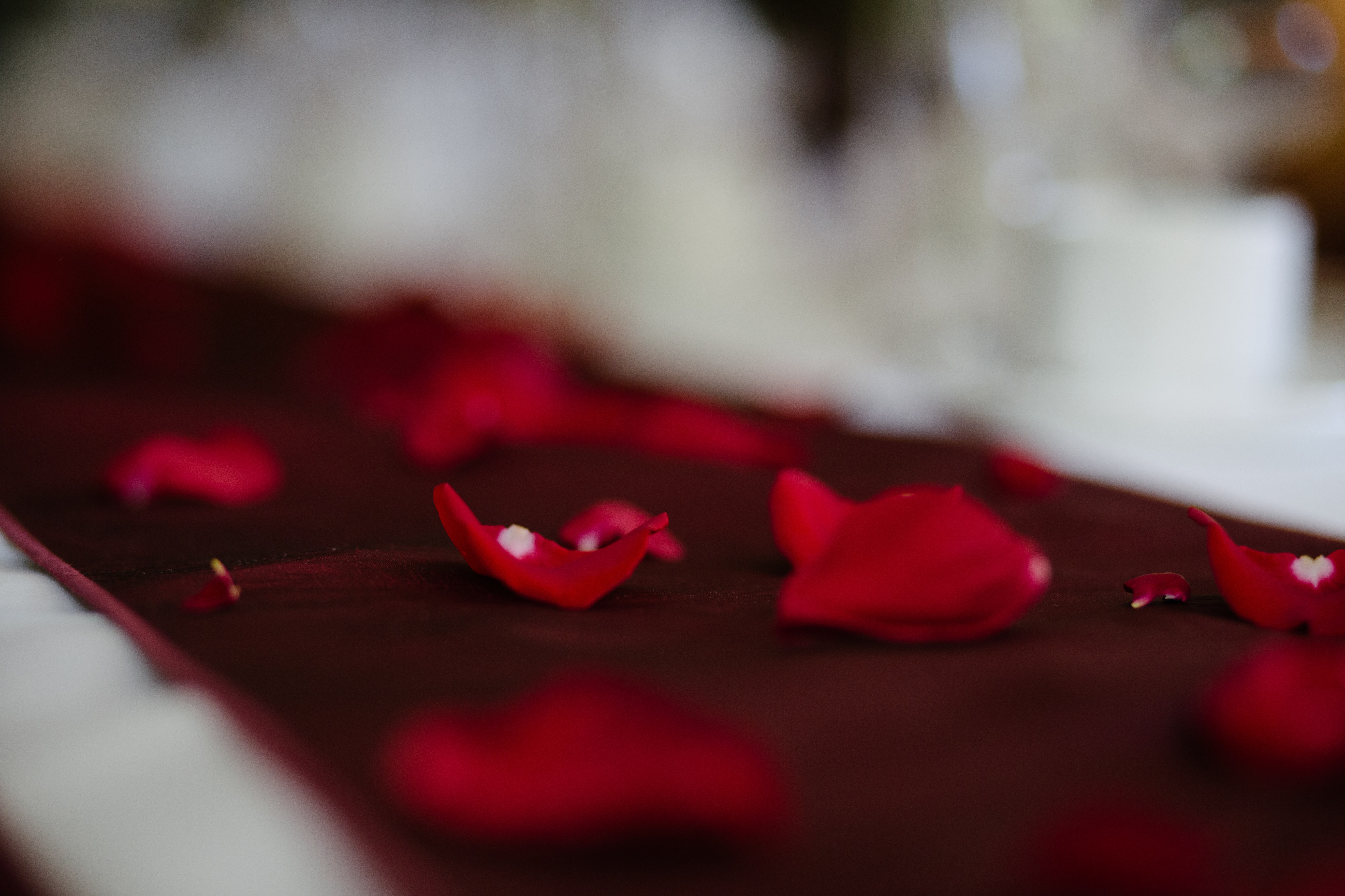 red petaled flower on red carpet close-up photography