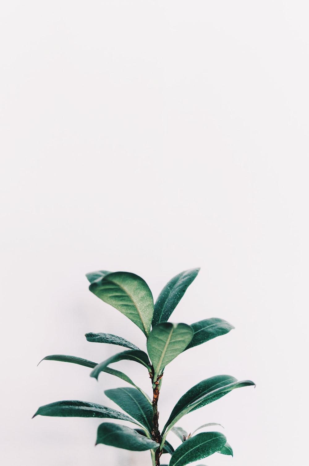green leafed plant closeup photo