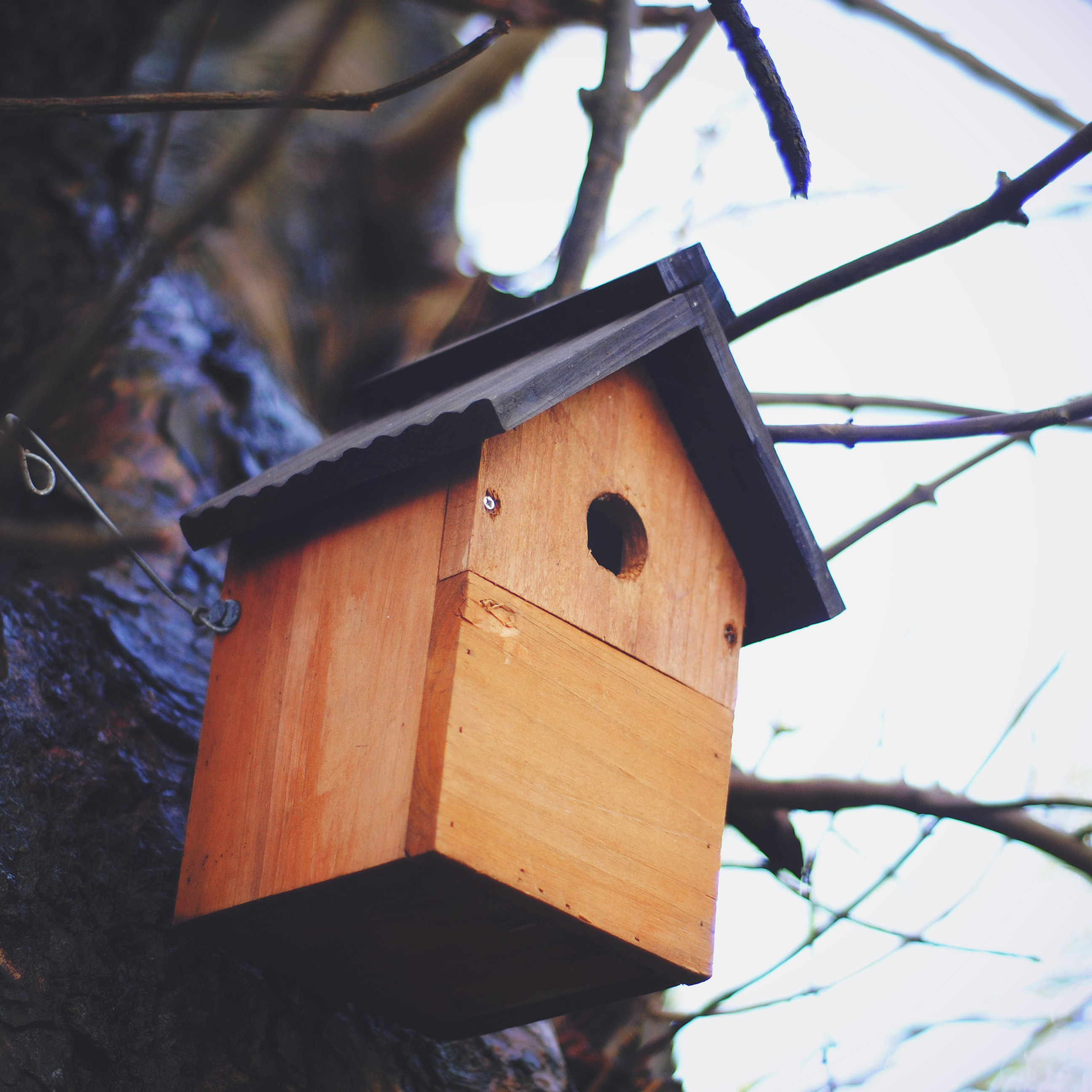 low-angle photography of brown wooden birdhouse