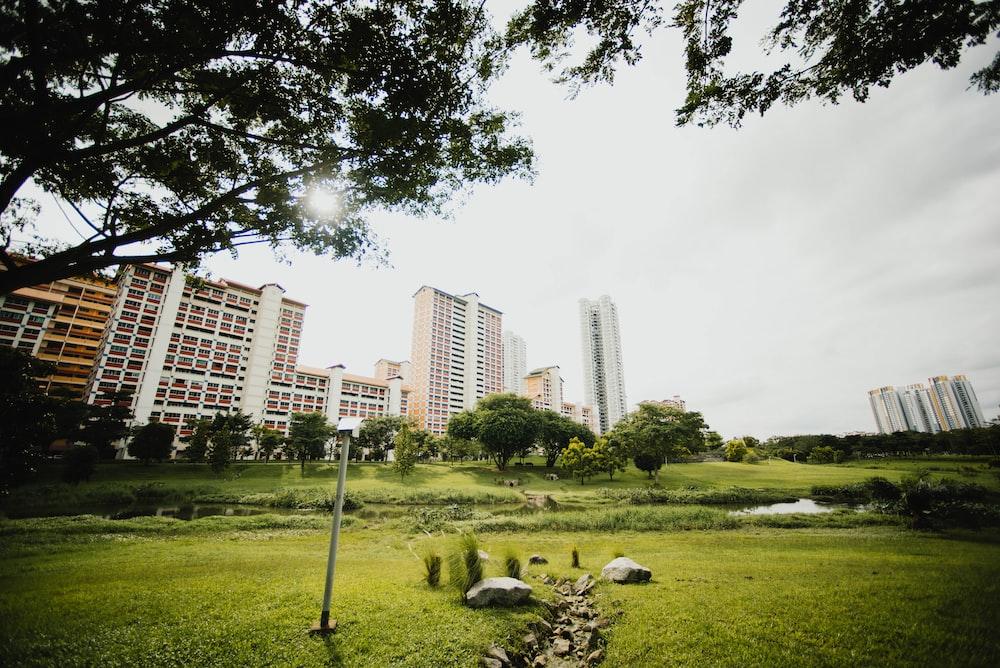 landscape photography of park against high-rise buildings