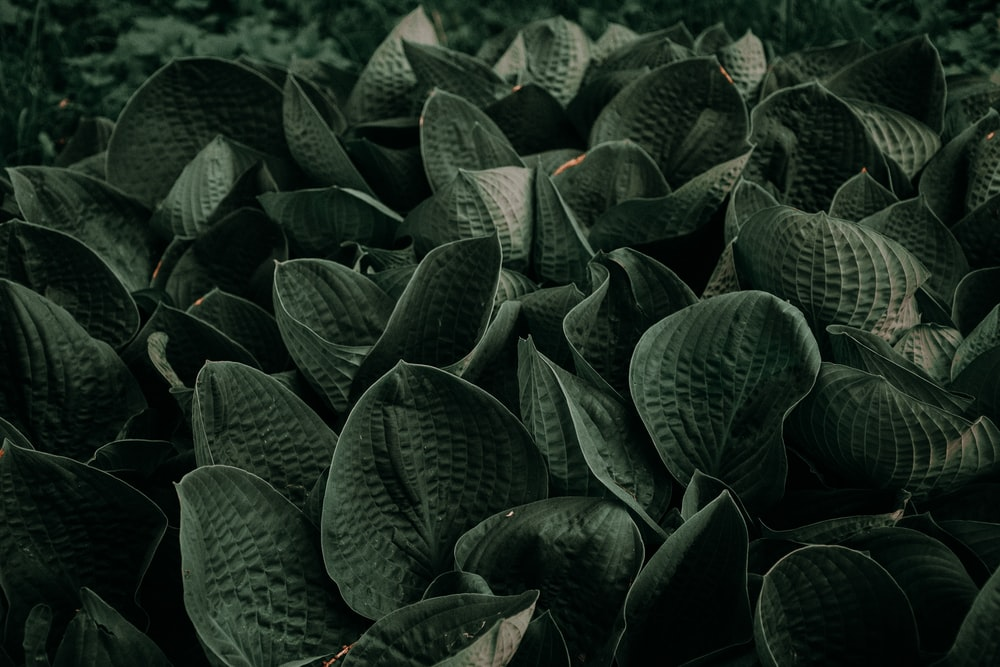 close up photography of green leafed plants