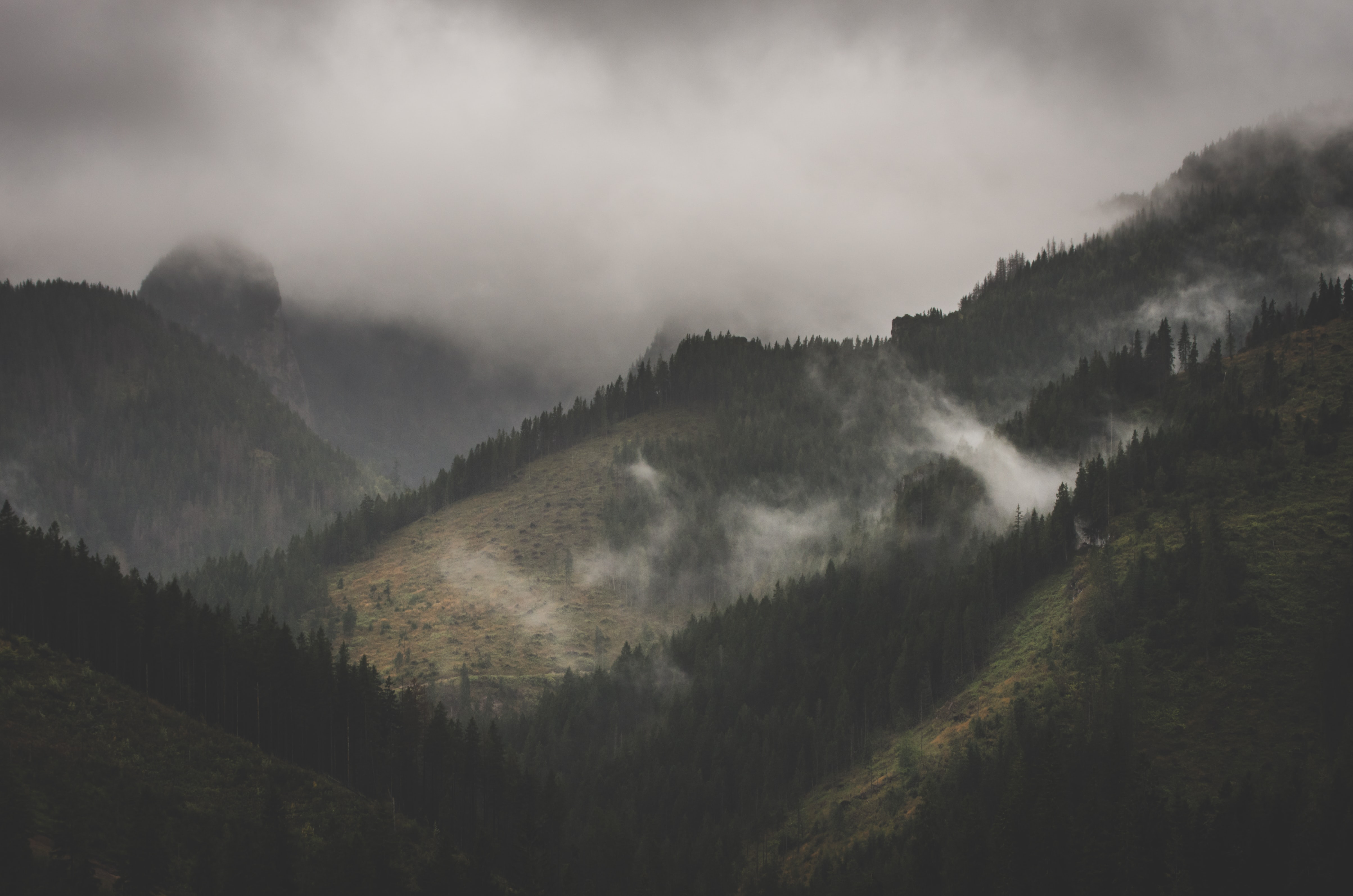 mountain covered on fog