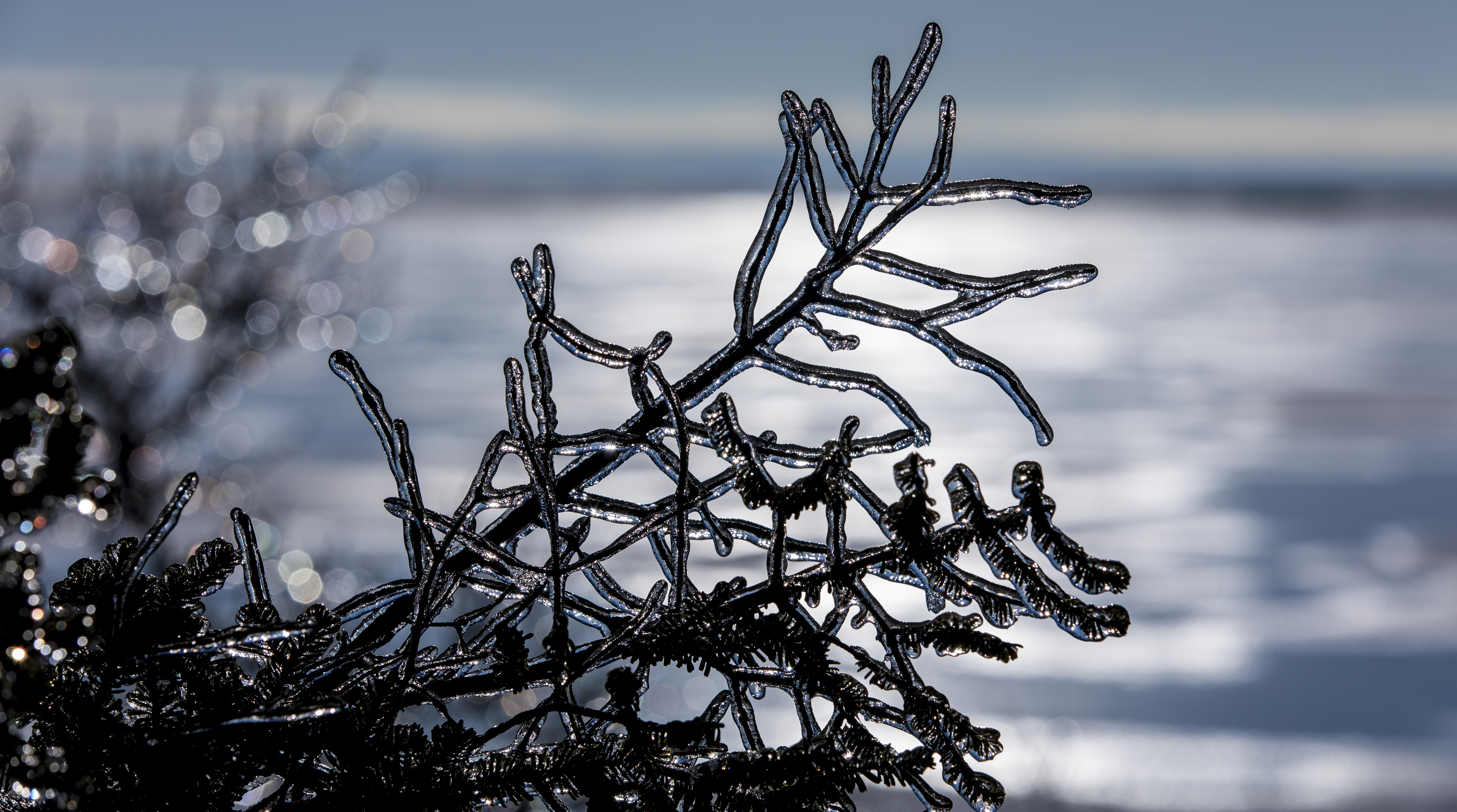 ice covered tree branch