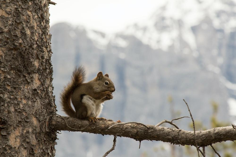 brown chipmunk on tree branch