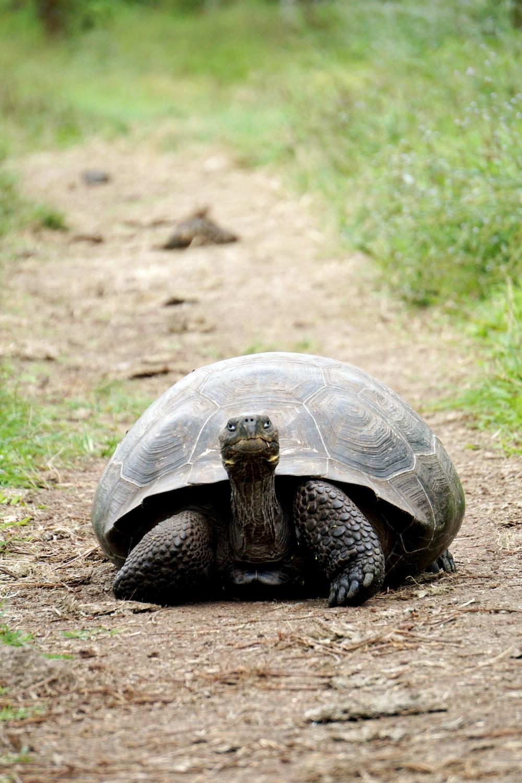 brown turtle between grasses