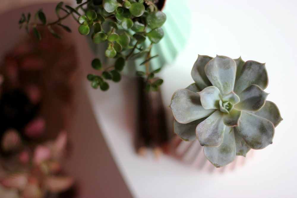 selective focus photography of green blooming succulent plant