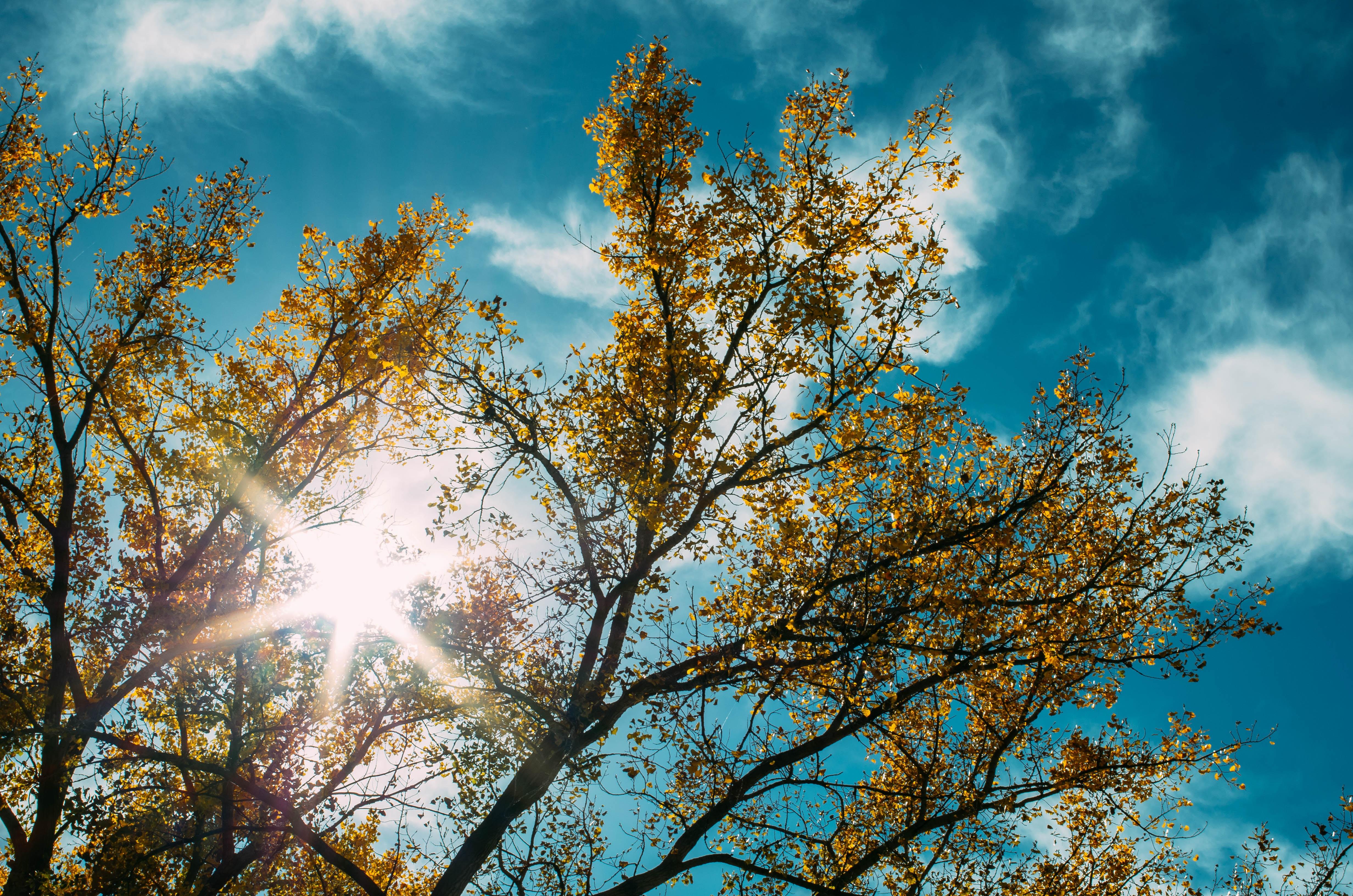 brown leafed trees
