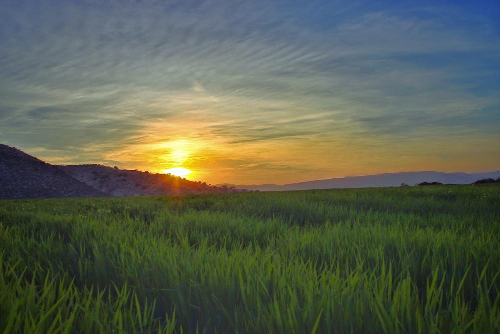 green grass field near mountain at golden hour