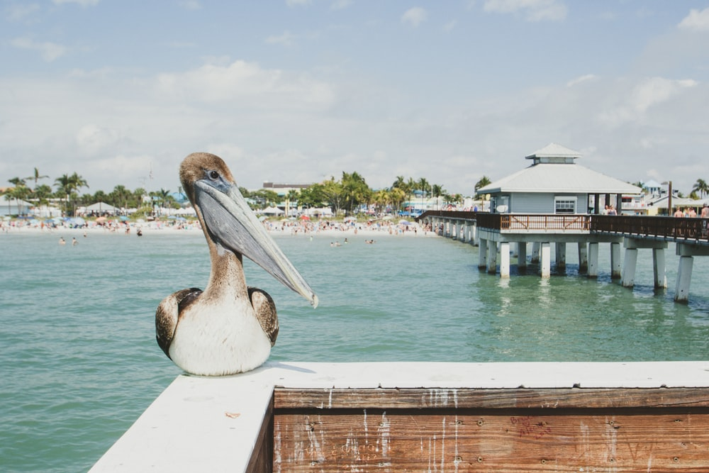 gray long beak bird near sea at daytime