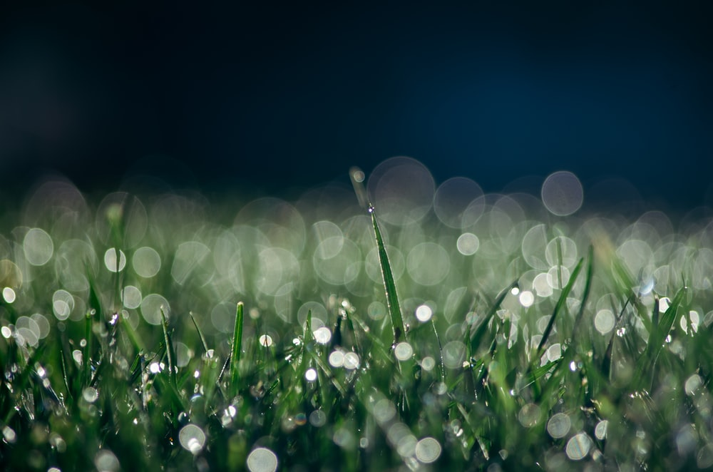 focused photo of green grasses