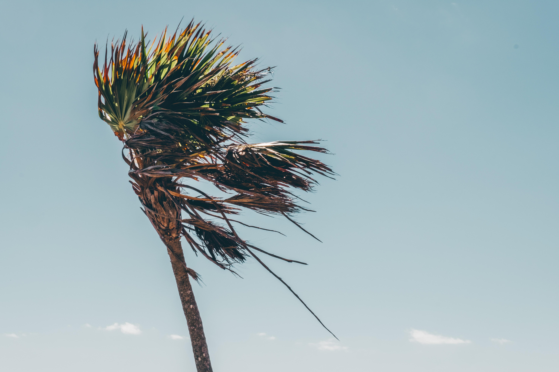 brown tropical tree
