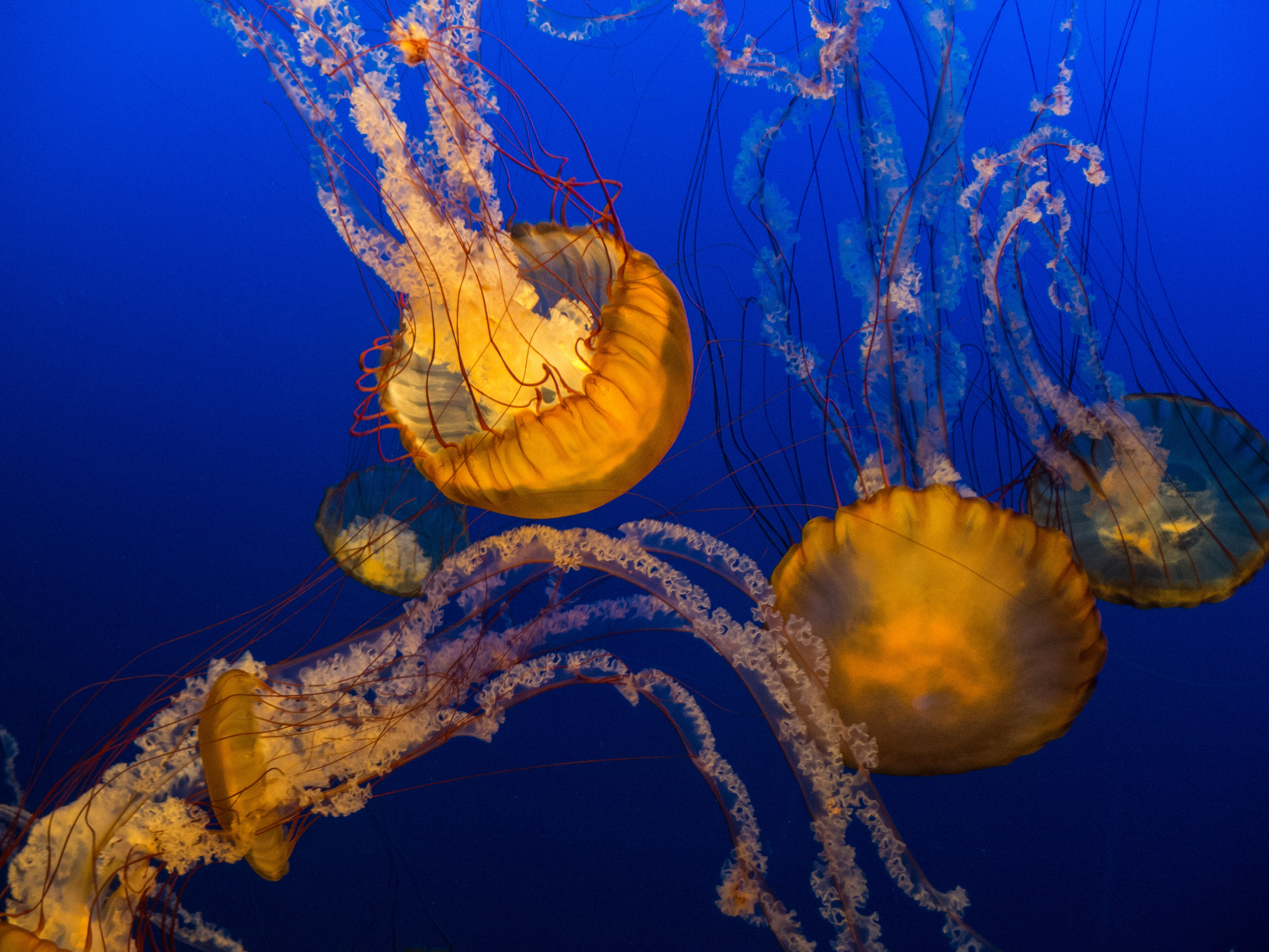 selective focus photography of group of orange jellyfish