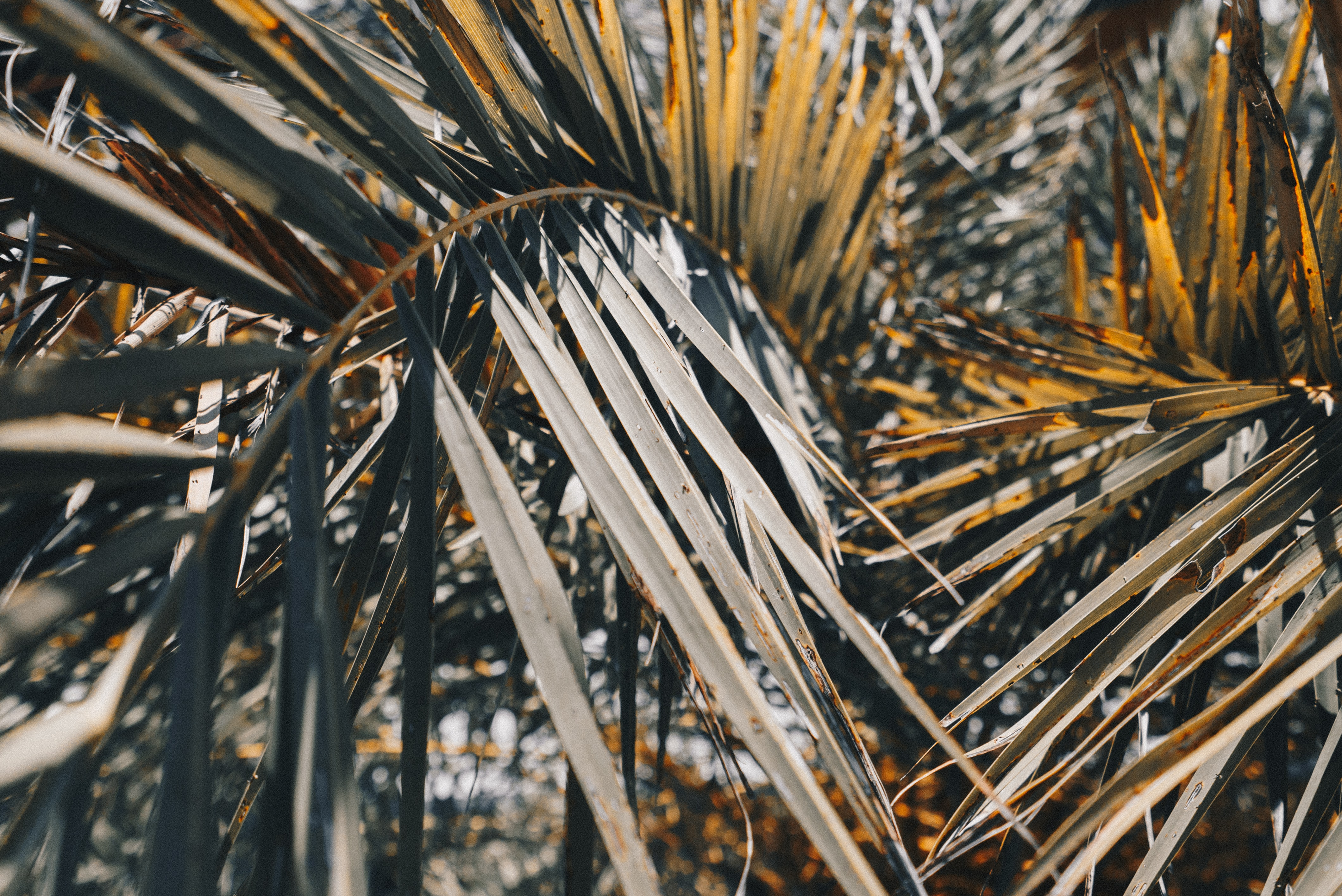 closeup photography of coconut leaves