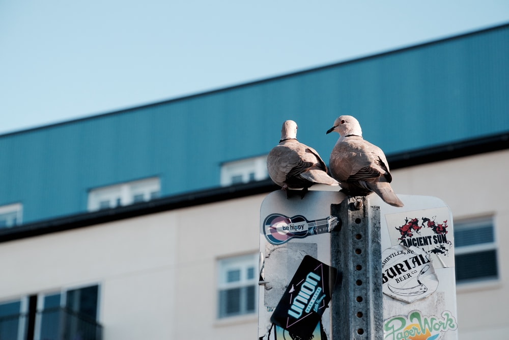 photo of two pigeons on signage