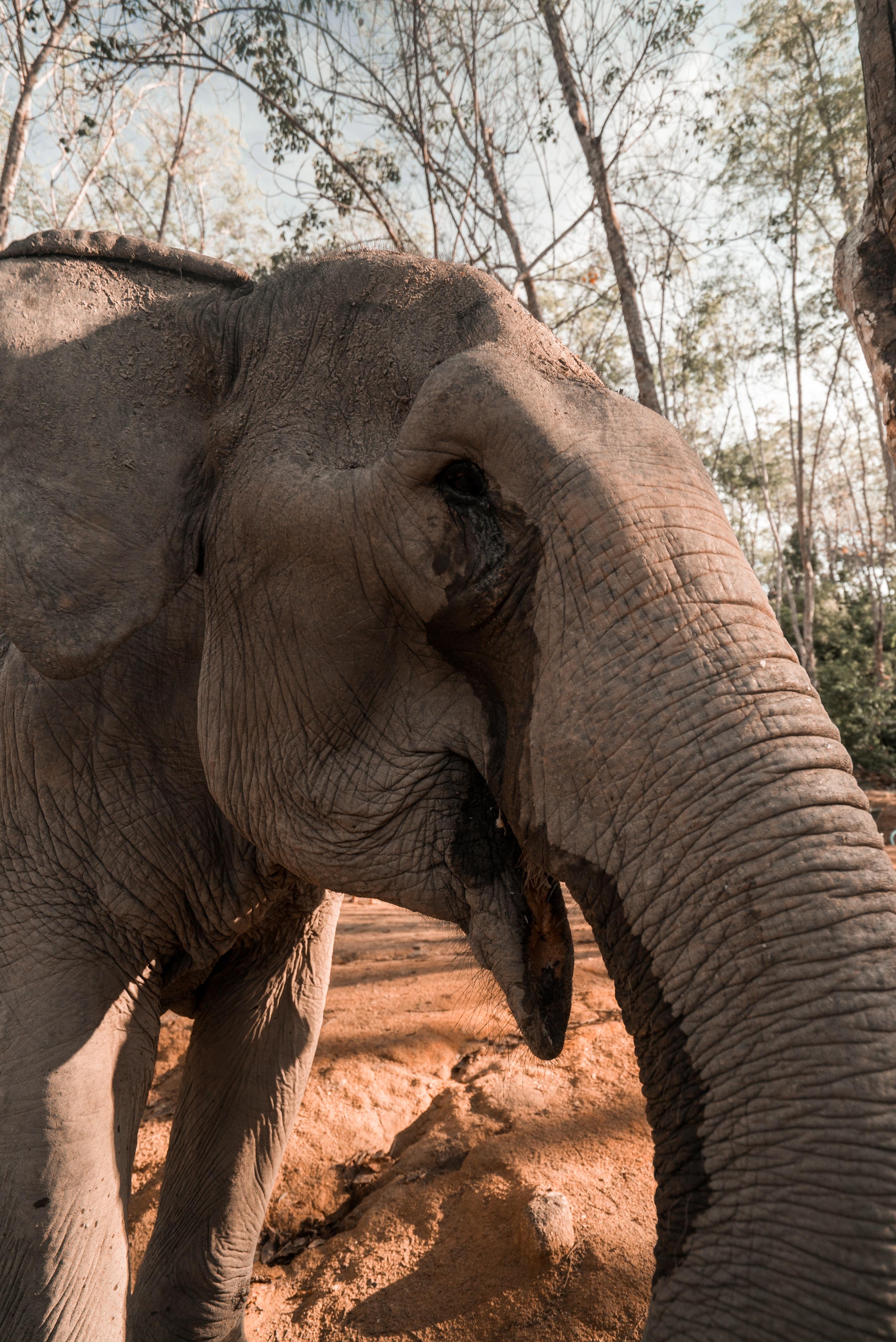 gray elephant