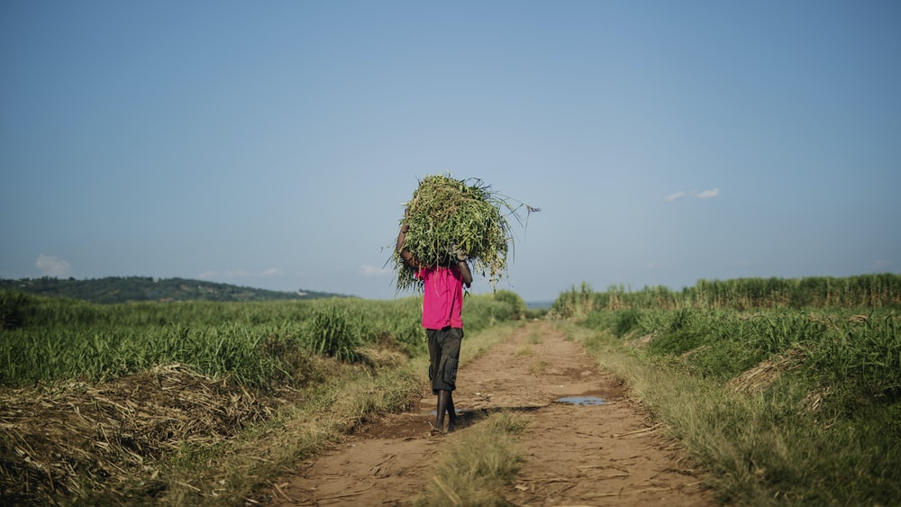 man carrying a grass while walking