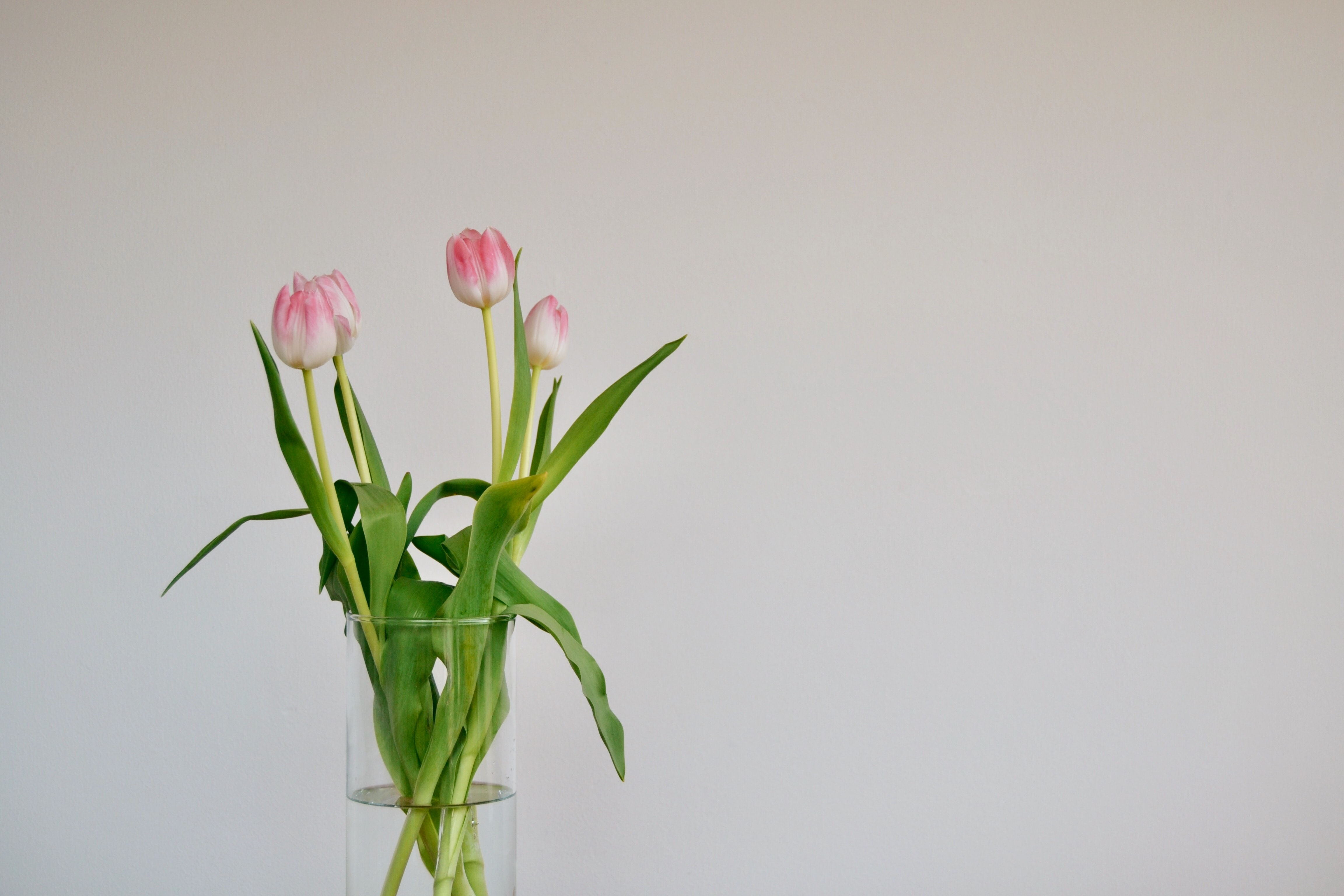 pink and white petaled flower bloom