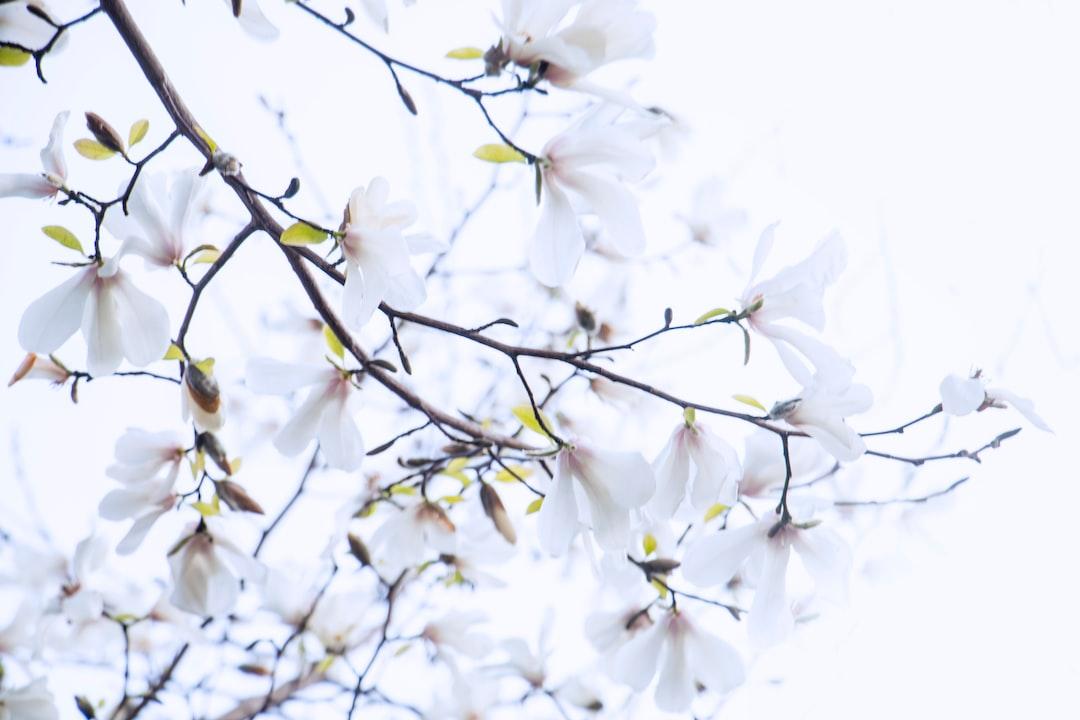 4789. Virágok